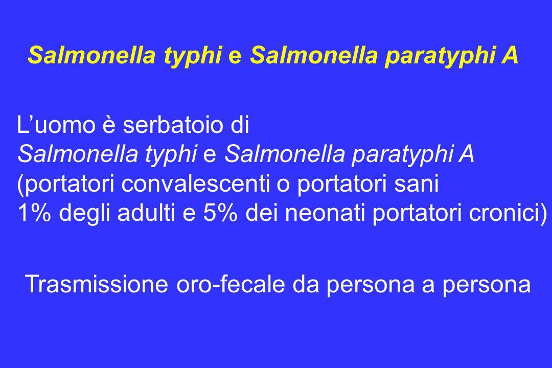L'uomo è serbatoio di Salmonella typhi e Salmonella paratyphi A (portatori convalescenti o portatori sani 1% degli adulti e 5% dei neonati portatori c