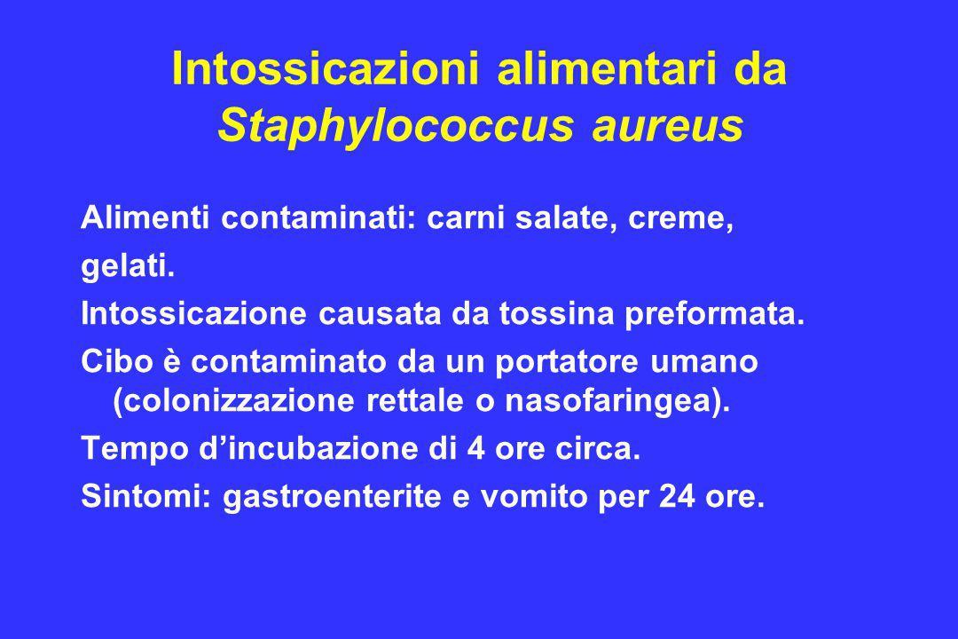 Intossicazioni alimentari da Staphylococcus aureus Alimenti contaminati: carni salate, creme, gelati. Intossicazione causata da tossina preformata. Ci
