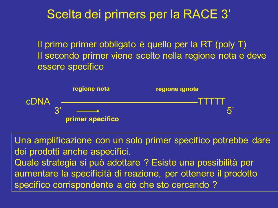 RACE 3' TTT…..TTT 5' AAA….AAA n mRNA poly(A) tail 1 - Annealing tra la coda di polyA dell'mRNA e un primer contenente una coda di oligo(dT) all'estremità 3' e retrotrascizione 5' AAA….AAA n TTT…..TTT 5' 3' Alla facile degradabilità dell'RNA; All'alta probabilità di avere un RNA con strutture secondarie; Alla bassa specificità di questa fase;