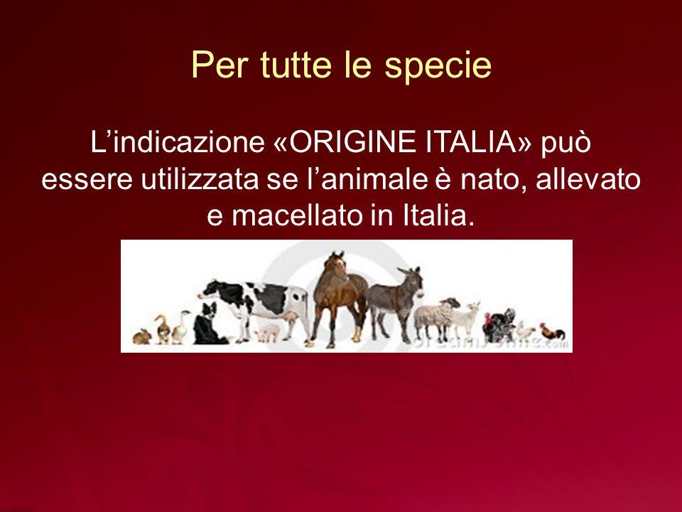 Per tutte le specie L'indicazione «ORIGINE ITALIA» può essere utilizzata se l'animale è nato, allevato e macellato in Italia.