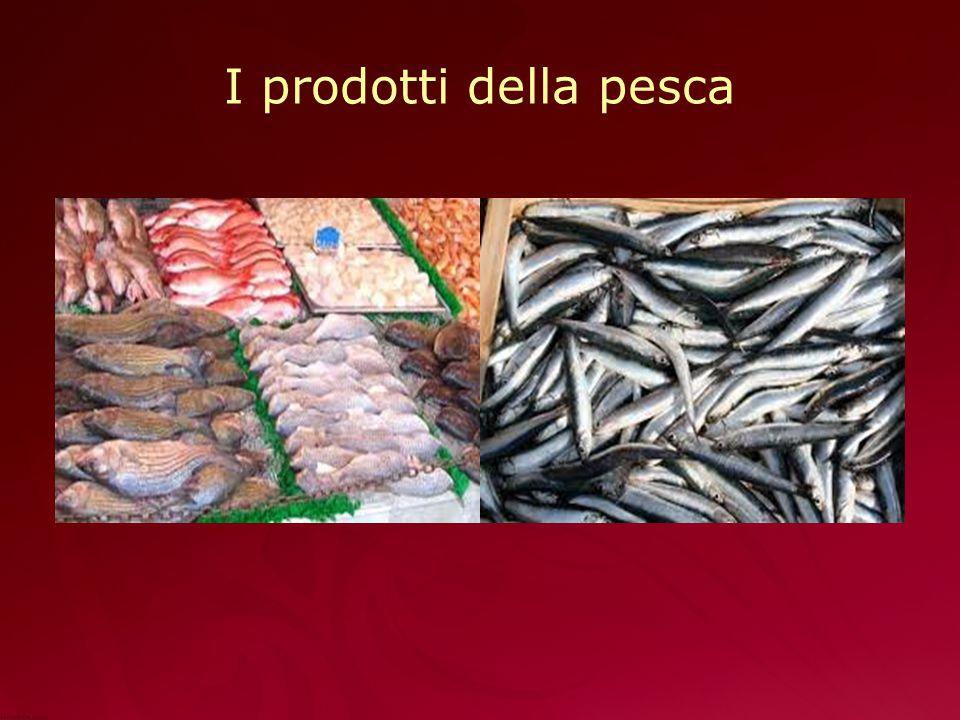 I prodotti della pesca