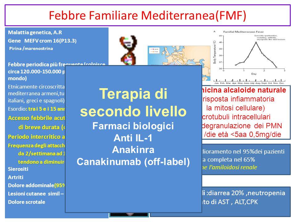 Malattia genetica, A.R Gene MEFV crom 16(P13.3 ) Pirina /marenostrina Febbre periodica più frequente (colpisce circa 120.000-150.000 persone in tutto