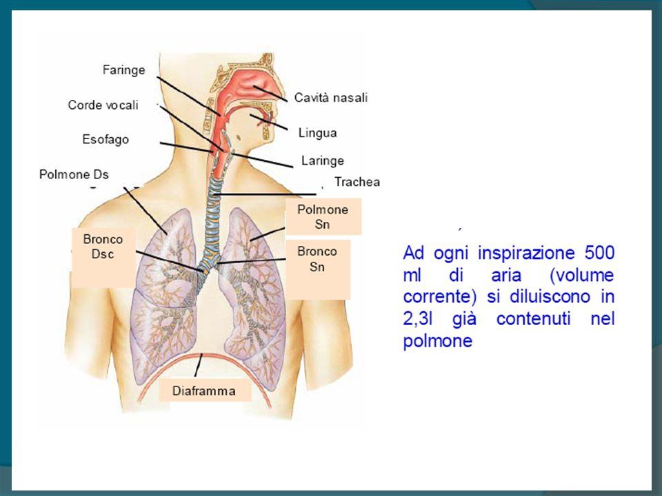 La ventilazione polmonare è data dal volume di aria che complessivamente entra ed esce dal polmone nell unità di tempo VC x FR = V min Ventilazione polmonare 500 ml x 15 atti/min = 7.500 ml/min