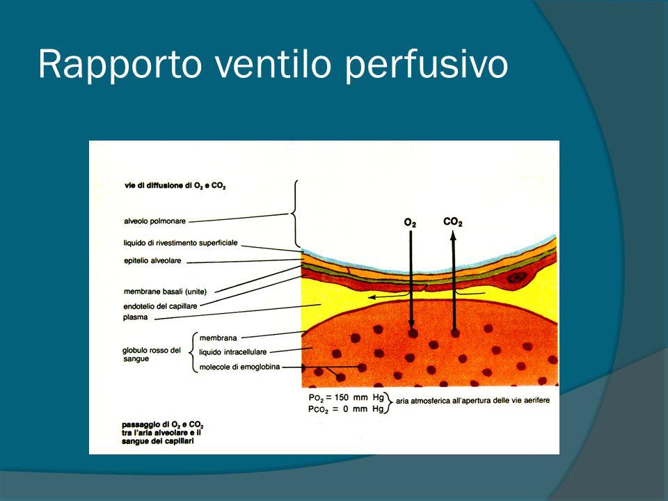 Rapporto ventilo perfusivo