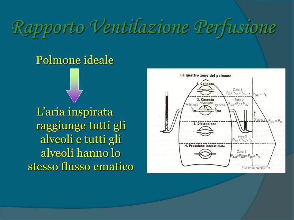 Rapporto Ventilazione Perfusione Polmone ideale L'aria inspirata raggiunge tutti gli alveoli e tutti gli alveoli hanno lo stesso flusso ematico