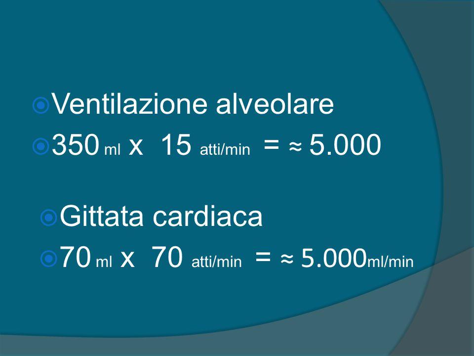  Ventilazione alveolare  350 ml x 15 atti/min = ≈ 5.000  Gittata cardiaca  70 ml x 70 atti/min = ≈ 5.000 ml/min