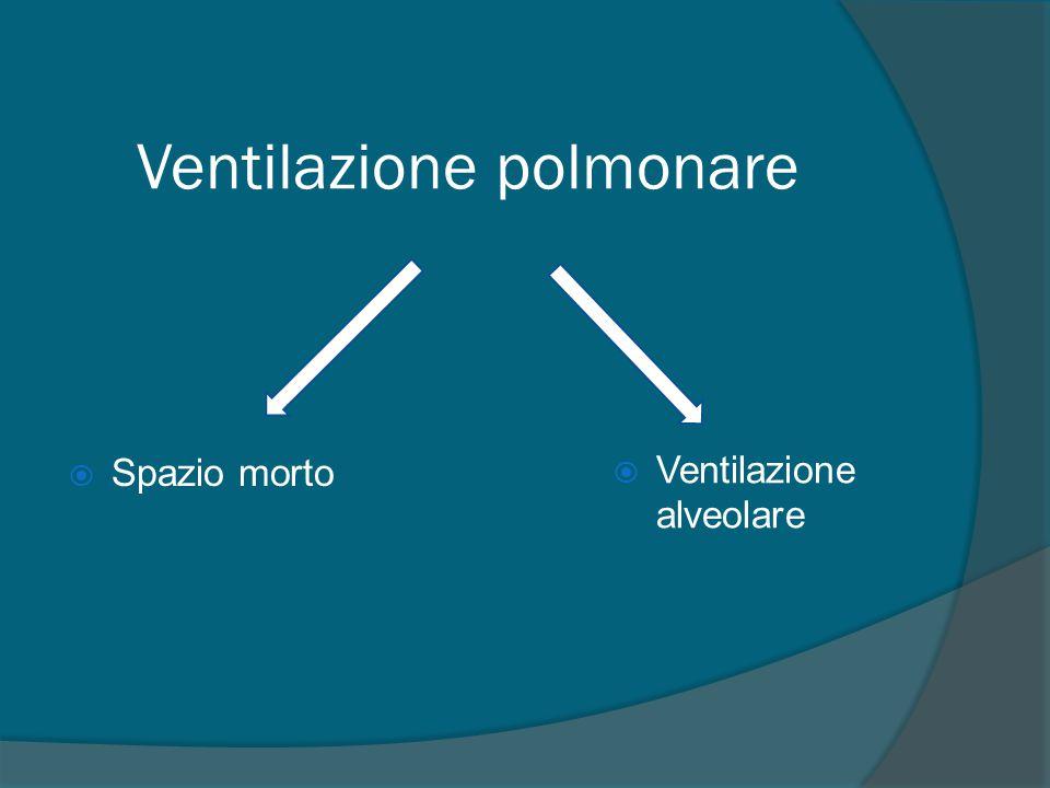 V'/Q' alto Zona 1 Zona 2 Zona 3 V'/Q' basso Rapporto V'/Q' nelle diverse regioni polmonari Perfusione