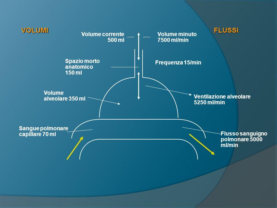La ventilazione alveolare  La ventilazione alveolare è data dal volume di aria che effettivamente partecipa agli scambi gassosi nell unità di tempo.