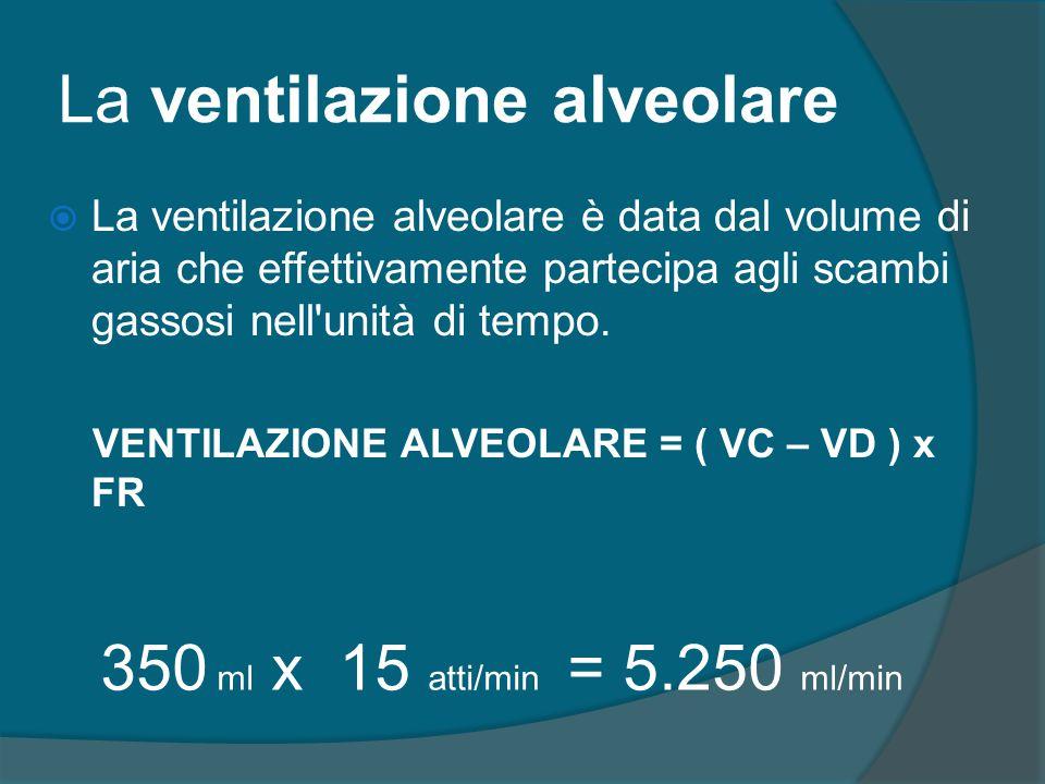 La ventilazione alveolare  La ventilazione alveolare è data dal volume di aria che effettivamente partecipa agli scambi gassosi nell'unità di tempo.