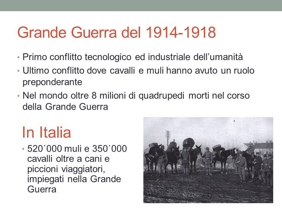 Grande Guerra del 1914-1918 Primo conflitto tecnologico ed industriale dell'umanità Ultimo conflitto dove cavalli e muli hanno avuto un ruolo preponde