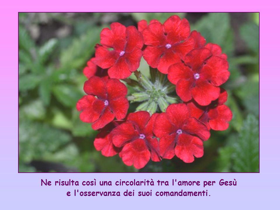 Ne risulta così una circolarità tra l amore per Gesù e l osservanza dei suoi comandamenti.