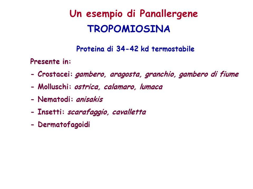 Un esempio di Panallergene TROPOMIOSINA Proteina di 34-42 kd termostabile Presente in: - Crostacei: gambero, aragosta, granchio, gambero di fiume - Mo