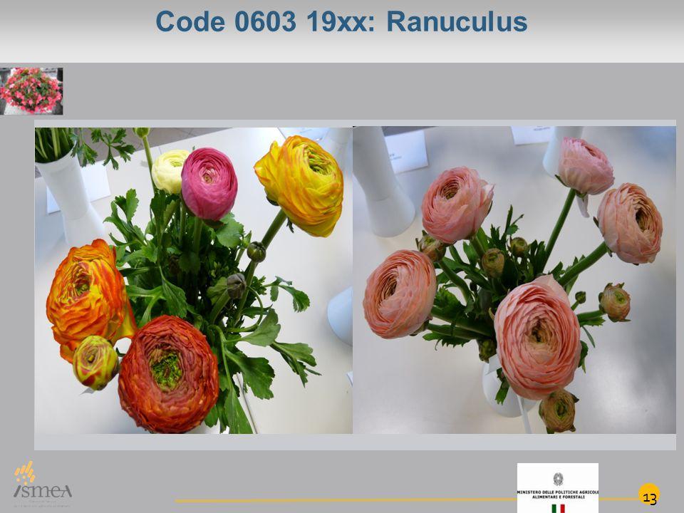 Code 0603 19xx: Ranuculus 13