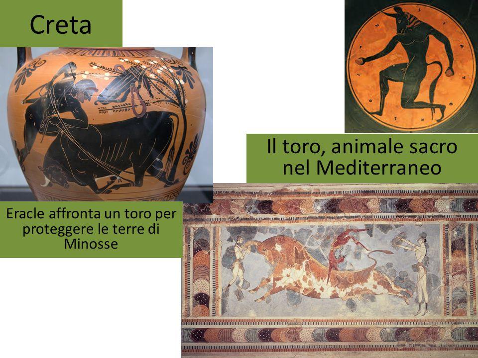 Creta Il toro, animale sacro nel Mediterraneo Eracle affronta un toro per proteggere le terre di Minosse