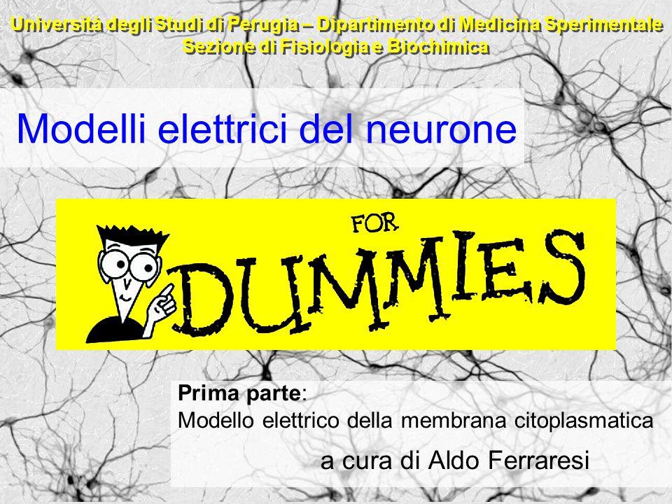 Modelli elettrici del neurone Prima parte: Modello elettrico della membrana citoplasmatica a cura di Aldo Ferraresi Università degli Studi di Perugia