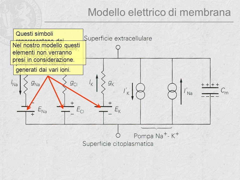 Modello elettrico di membrana Questi simboli rappresentano dei generatori di potenziale, e corrispondono ai potenziali di Nernst generati dai vari ion