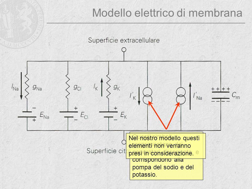 Modello elettrico di membrana Questi simboli rappresentano dei generatori di corrente, e corrispondono alla pompa del sodio e del potassio. Nel nostro