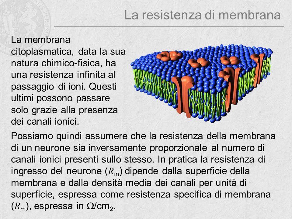 La resistenza di membrana La membrana citoplasmatica, data la sua natura chimico-fisica, ha una resistenza infinita al passaggio di ioni. Questi ultim