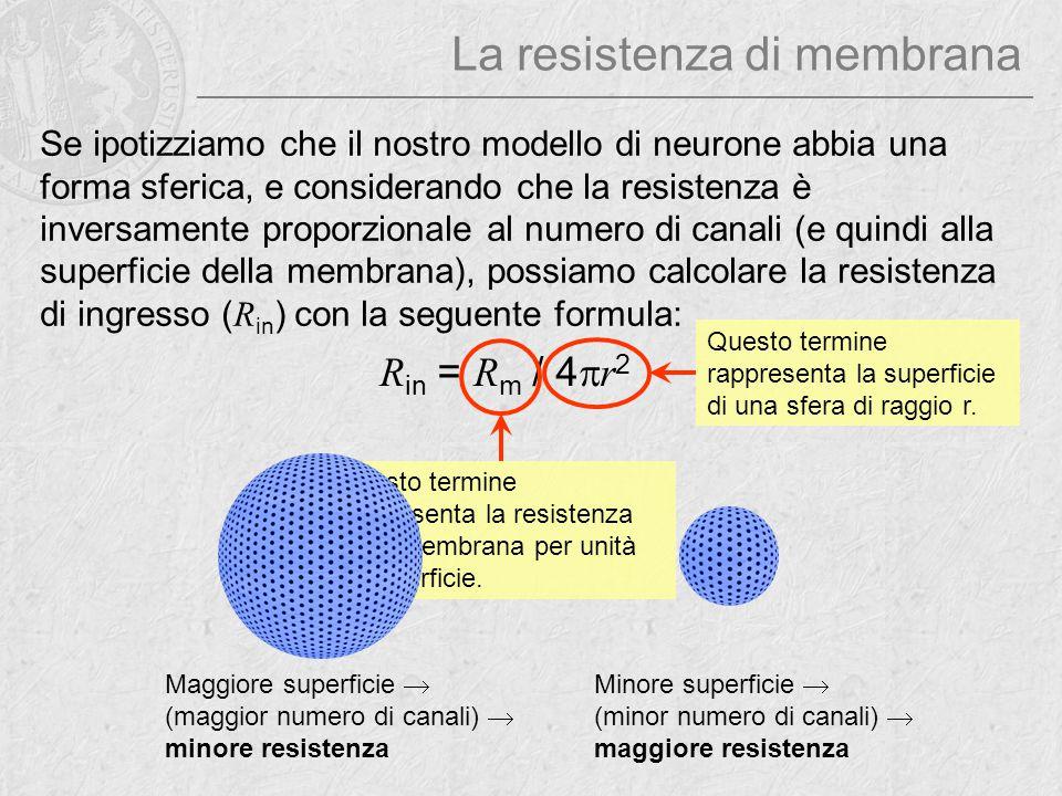La resistenza di membrana Se ipotizziamo che il nostro modello di neurone abbia una forma sferica, e considerando che la resistenza è inversamente pro