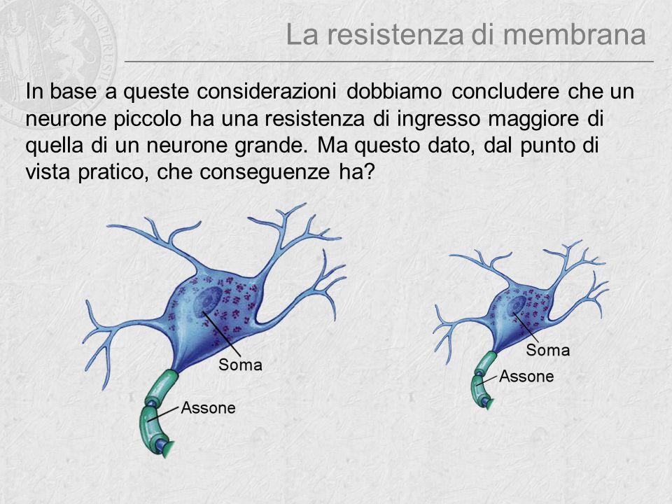 La resistenza di membrana In base a queste considerazioni dobbiamo concludere che un neurone piccolo ha una resistenza di ingresso maggiore di quella