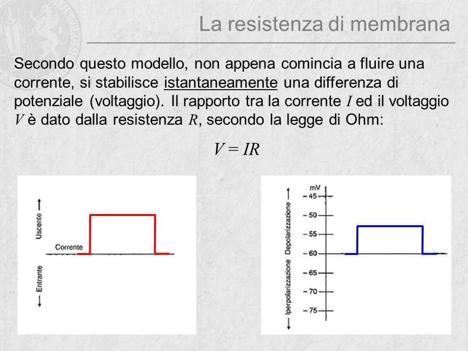 Secondo questo modello, non appena comincia a fluire una corrente, si stabilisce istantaneamente una differenza di potenziale (voltaggio). Il rapporto