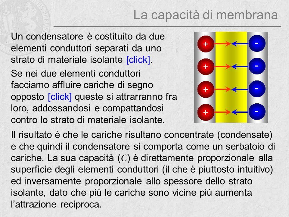 La capacità di membrana Un condensatore è costituito da due elementi conduttori separati da uno strato di materiale isolante [click]. Se nei due eleme