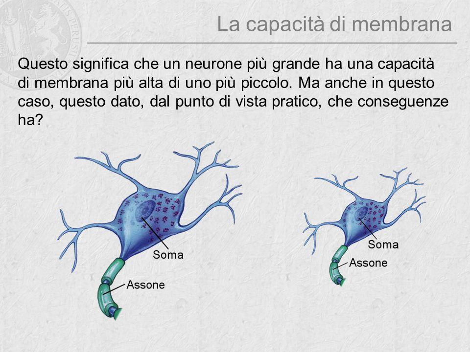 La capacità di membrana Questo significa che un neurone più grande ha una capacità di membrana più alta di uno più piccolo. Ma anche in questo caso, q