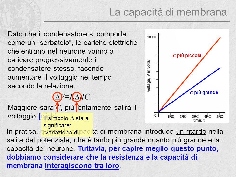 """La capacità di membrana Dato che il condensatore si comporta come un """"serbatoio"""", le cariche elettriche che entrano nel neurone vanno a caricare progr"""