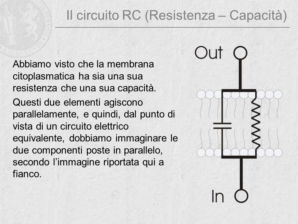 Il circuito RC (Resistenza – Capacità) Abbiamo visto che la membrana citoplasmatica ha sia una sua resistenza che una sua capacità. Questi due element