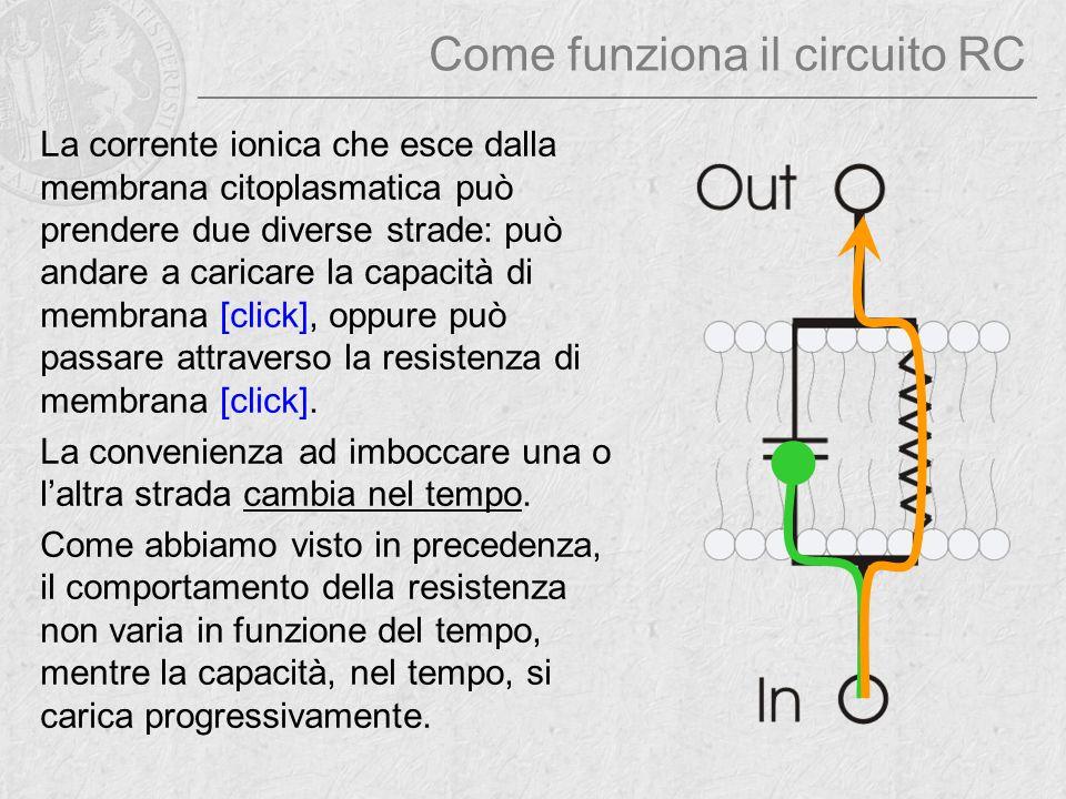 Come funziona il circuito RC La corrente ionica che esce dalla membrana citoplasmatica può prendere due diverse strade: può andare a caricare la capac