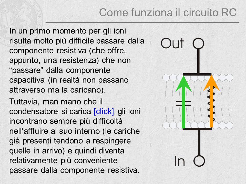 Come funziona il circuito RC In un primo momento per gli ioni risulta molto più difficile passare dalla componente resistiva (che offre, appunto, una