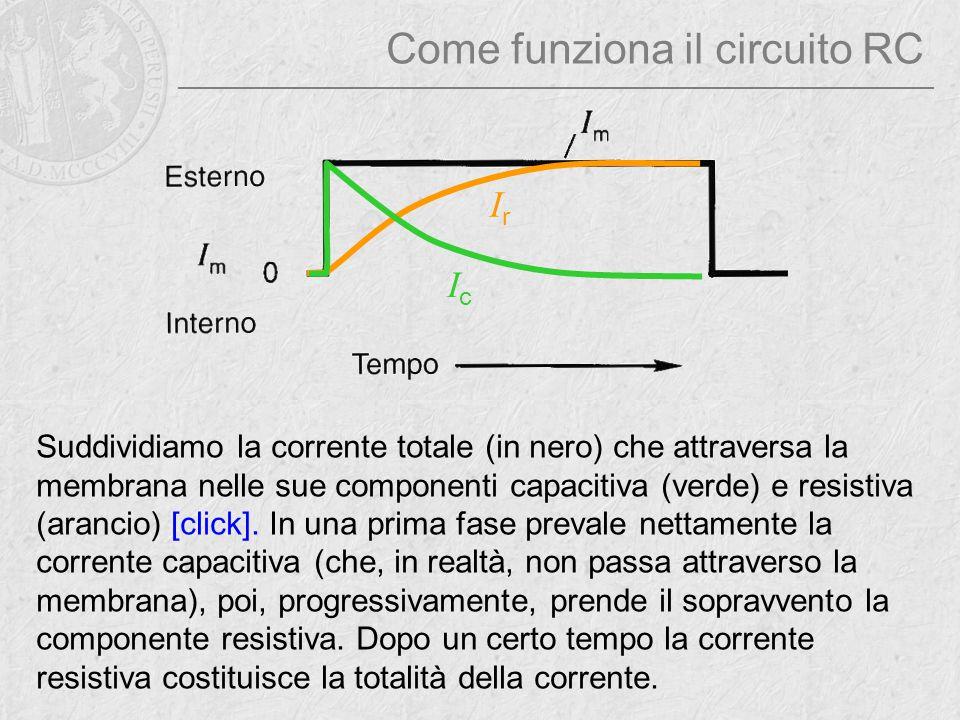 Come funziona il circuito RC Suddividiamo la corrente totale (in nero) che attraversa la membrana nelle sue componenti capacitiva (verde) e resistiva