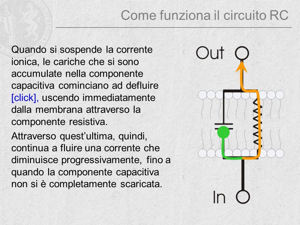 Come funziona il circuito RC Quando si sospende la corrente ionica, le cariche che si sono accumulate nella componente capacitiva cominciano ad deflui