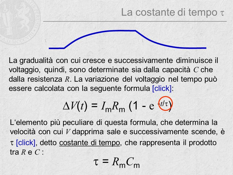  = R m C m  V ( t ) = I m R m (1 - e - t /  ) La gradualità con cui cresce e successivamente diminuisce il voltaggio, quindi, sono determinate sia