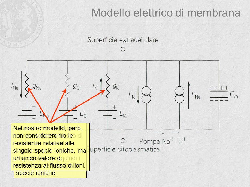 Modello elettrico di membrana Questi simboli rappresentano dei generatori di potenziale, e corrispondono ai potenziali di Nernst generati dai vari ioni.