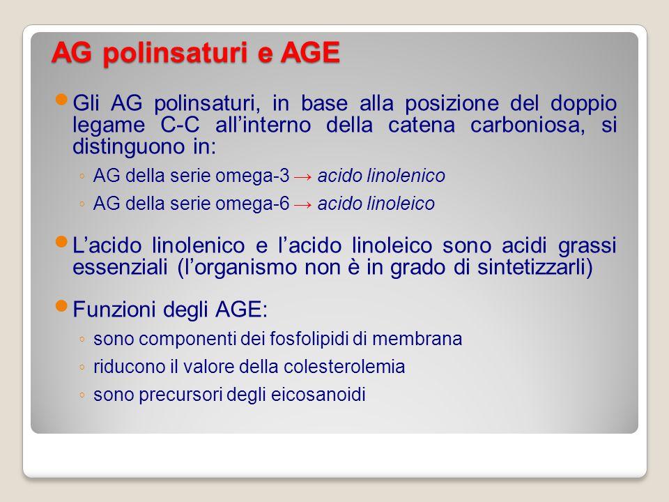 AG polinsaturi e AGE Gli AG polinsaturi, in base alla posizione del doppio legame C-C all'interno della catena carboniosa, si distinguono in: ◦ AG del