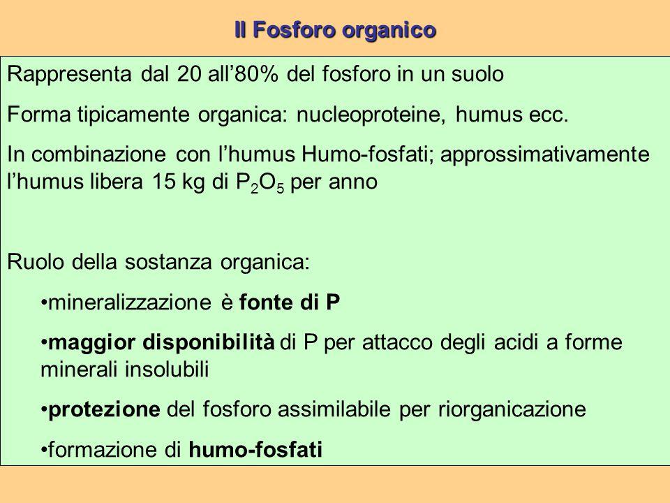 Rappresenta dal 20 all'80% del fosforo in un suolo Forma tipicamente organica: nucleoproteine, humus ecc.