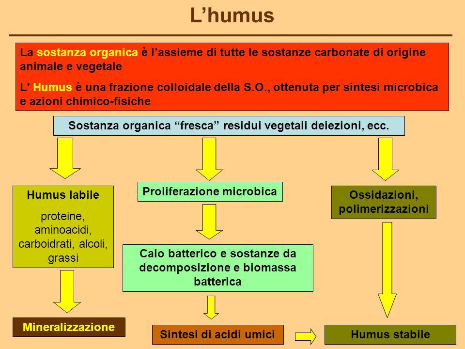 L'humus La sostanza organica è l'assieme di tutte le sostanze carbonate di origine animale e vegetale L Humus è una frazione colloidale della S.O., ottenuta per sintesi microbica e azioni chimico-fisiche Sostanza organica fresca residui vegetali deiezioni, ecc.