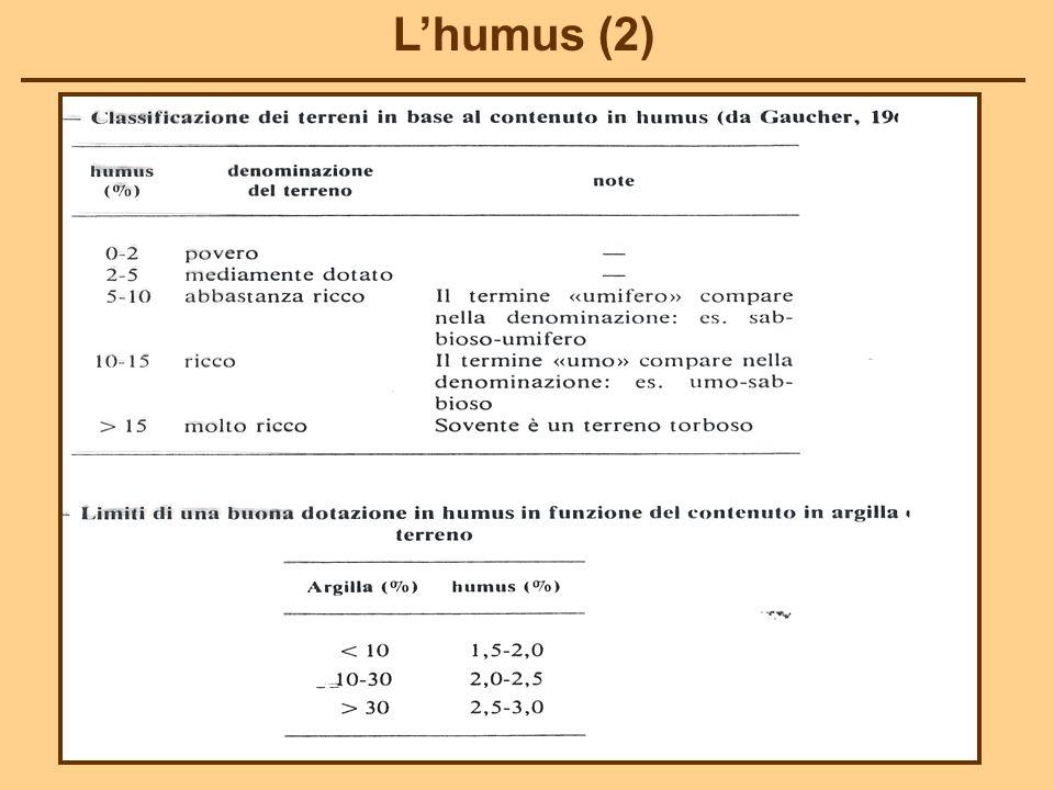 L'humus (2)