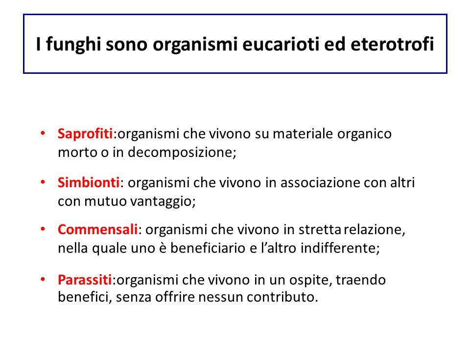 I funghi sono organismi eucarioti ed eterotrofi Saprofiti:organismi che vivono su materiale organico morto o in decomposizione; Simbionti: organismi c