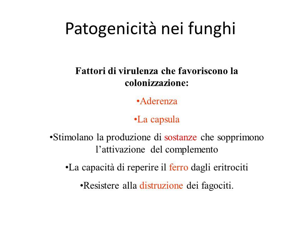 Patogenicità nei funghi Fattori di virulenza che favoriscono la colonizzazione: Aderenza La capsula Stimolano la produzione di sostanze che sopprimono