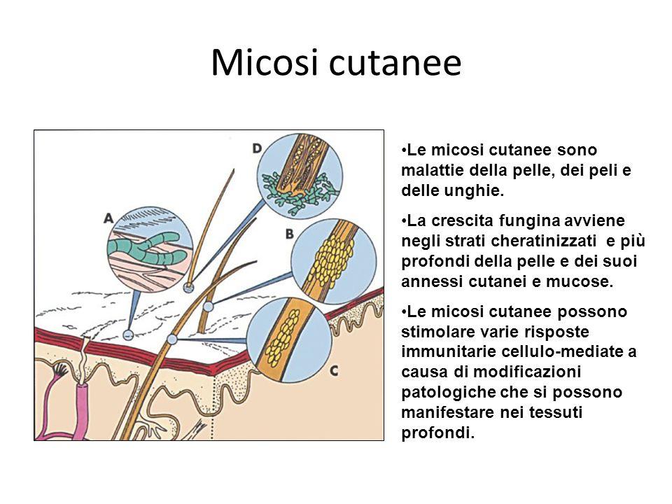 Micosi cutanee Le micosi cutanee sono malattie della pelle, dei peli e delle unghie. La crescita fungina avviene negli strati cheratinizzati e più pro