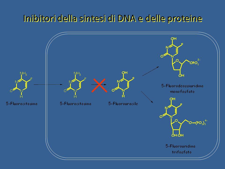 Inibitori della sintesi di DNA e delle proteine