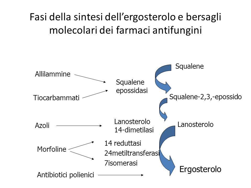 Fasi della sintesi dell'ergosterolo e bersagli molecolari dei farmaci antifungini Squalene-2,3,-epossido Allilammine Tiocarbammati Azoli Squalene Lano