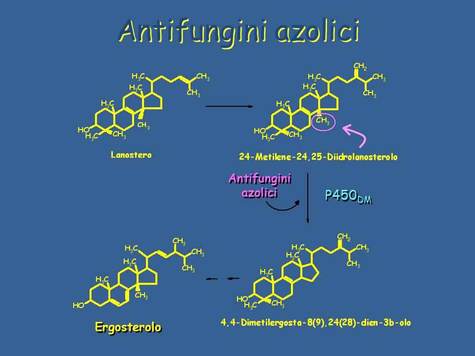 Antifungini azolici Ergosterolo Antifungini azolici P450 DM