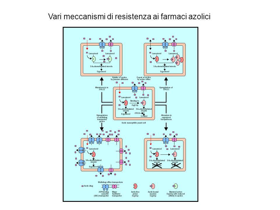 Vari meccanismi di resistenza ai farmaci azolici