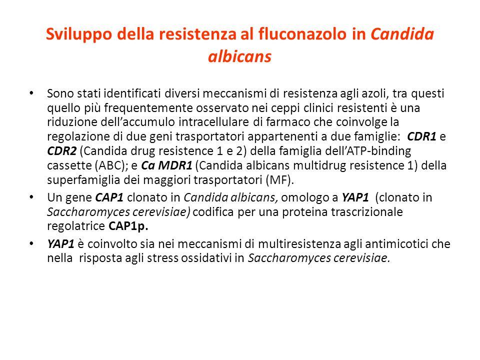 Sviluppo della resistenza al fluconazolo in Candida albicans Sono stati identificati diversi meccanismi di resistenza agli azoli, tra questi quello pi