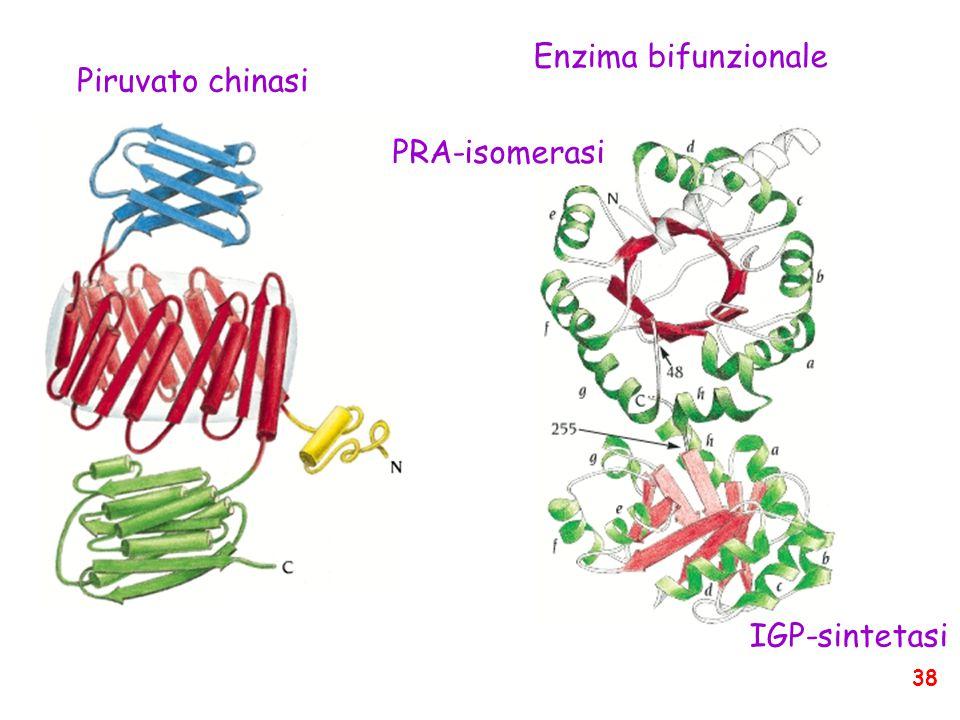Piruvato chinasi Enzima bifunzionale PRA-isomerasi IGP-sintetasi 38