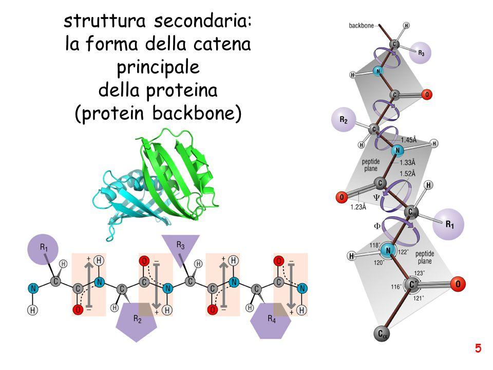struttura secondaria: la forma della catena principale della proteina (protein backbone) 5
