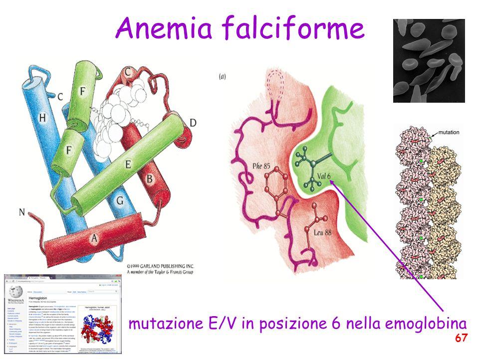 mutazione E/V in posizione 6 nella emoglobina Anemia falciforme 67